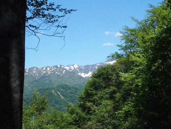 釈迦岳を展望しています。長い長い釈迦新道を下山・・・誰にも会わなかったなぁぁ!!