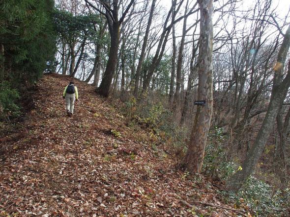 尾根をしばらく歩くともうすぐそこが山頂・・・登山口から15~20分程度です。