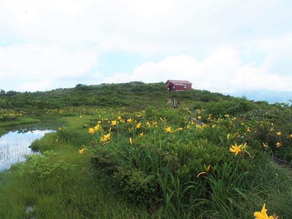 小屋の前に広がるニッコウキスゲのお花畑と赤池・・・今まで一番見事な咲き具合で感動ものです。