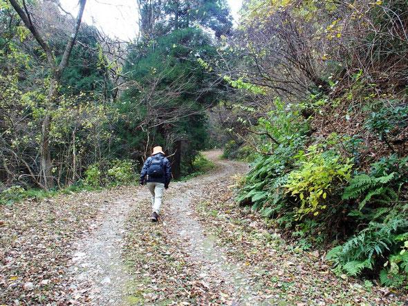 すぐに林道を登るようになるが、チェーンが張ってあります。よく整備された林道を登っていく。