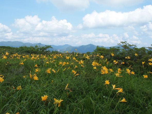 遠景の山々と調和して咲くニッコウキスゲが魅力的でした。