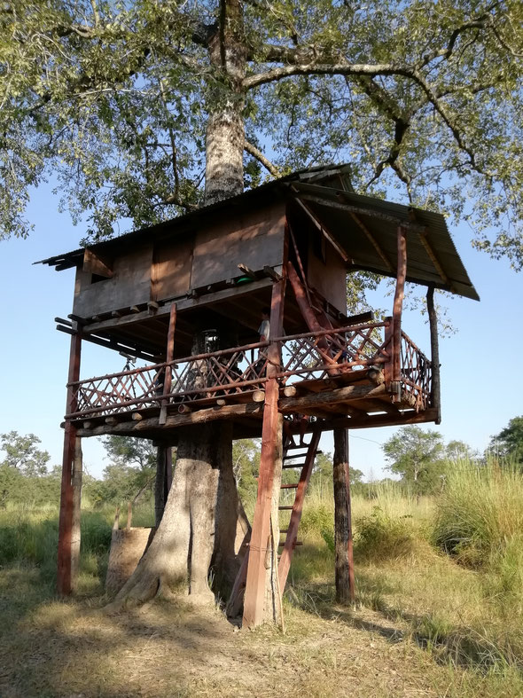 "Notre ""Tree-house"" into the wild"