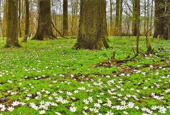 Weilburger Wald im Frühjahr