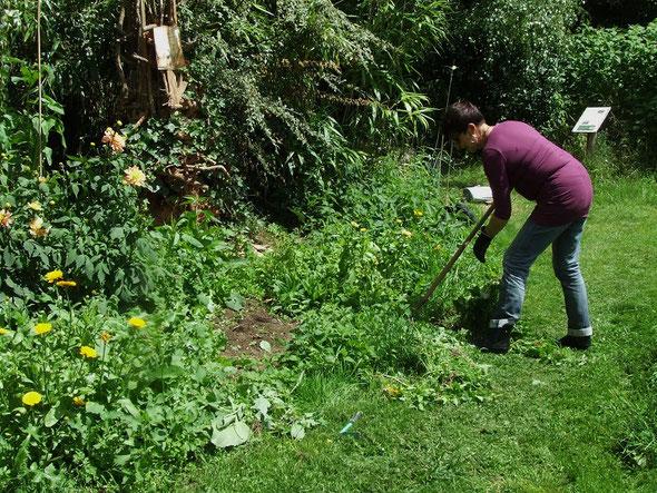 Remise en état du massif à l'entrée du jardin.