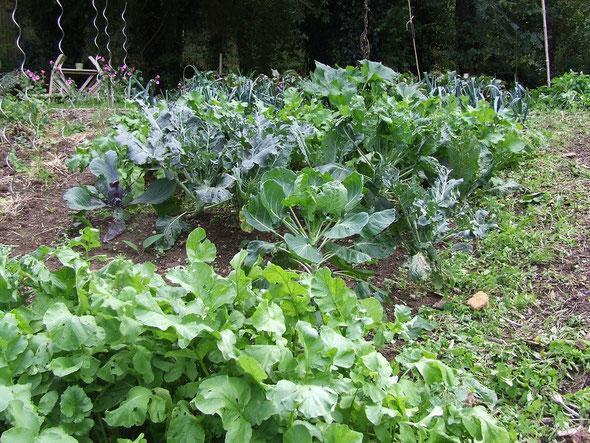 Les légumes encore en place