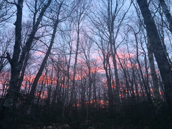 Spring sunset in the sugar woods.