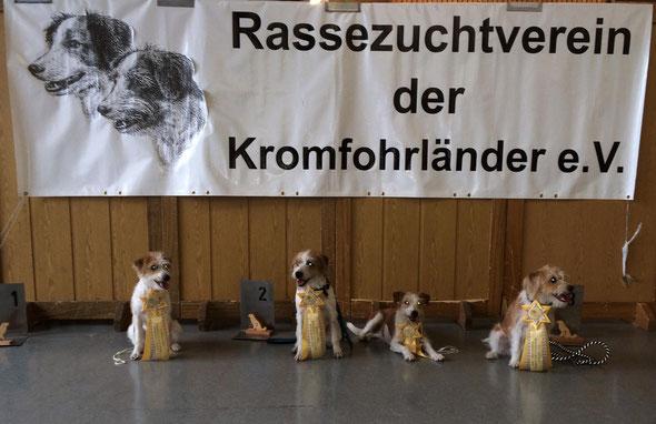 Die rauhen Steine auf dieser Ausstellung: Käthe, Kabou, Wara & Kimba