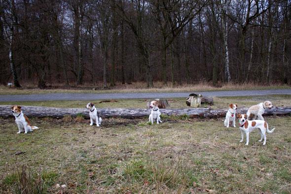 Baila, Ayko, Kabou, Cylie, Cassy & Benny (Kuper & Kalle fehlen auf diesem Bild)