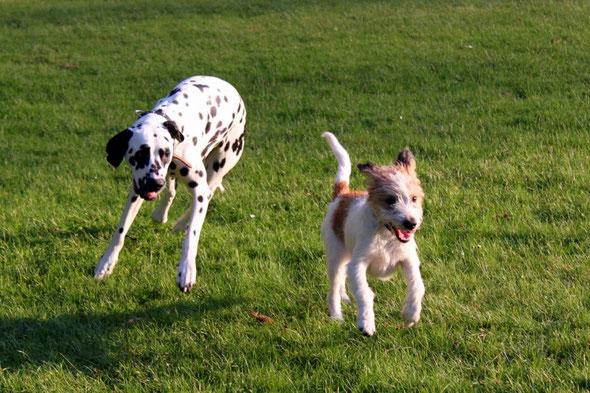 Luna & Kabou beim Toben im Park
