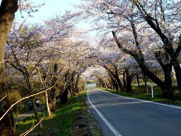 昔卒業式とかで人力で作る桜花道のイメージ