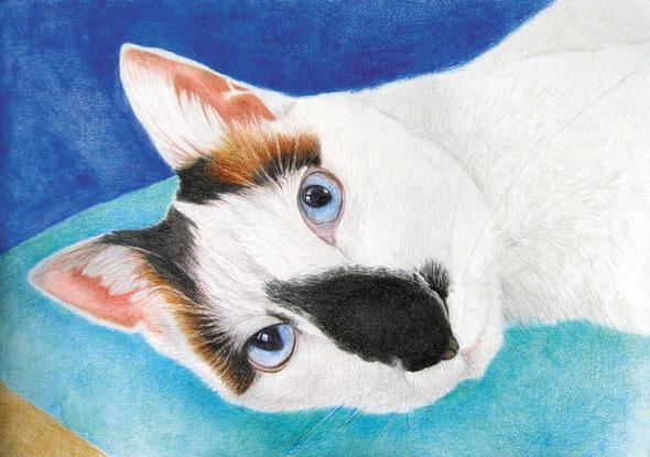 「横たわる猫」