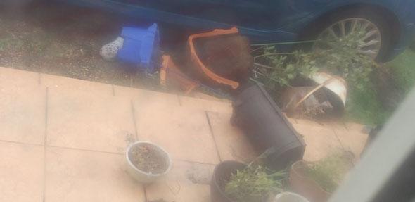 ブルーベリーの鉢が割れちゃいました(>_<)