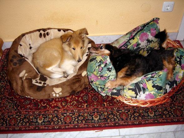 Cleo schaut noch ein kleines bisschen skeptisch ;-)