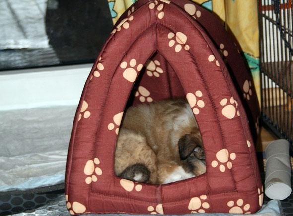Platz ist in der kleinsten Hütte! :-)