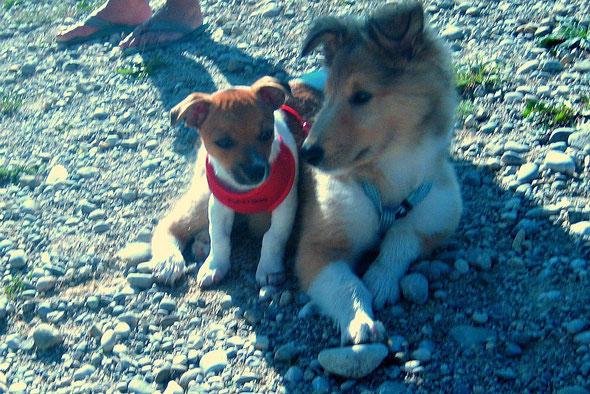 """Lennox mit seinem neuen Freund """"Balou"""" :-)"""
