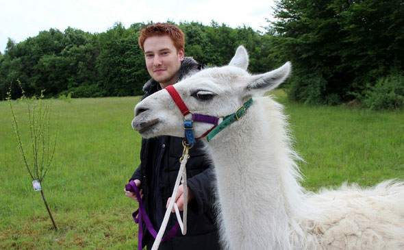 Lama, Wanderung, Pracht Lamas