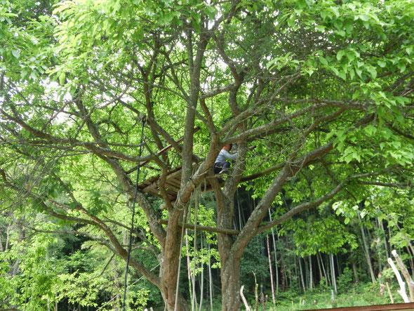 木登り楽しい!