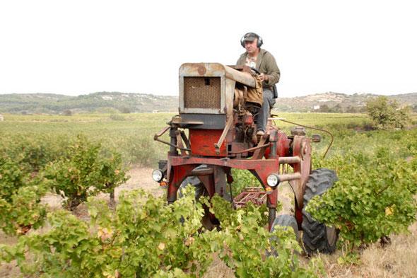 """Photo trouvée sur le net """"entretien du vignoble à Frontignan"""""""