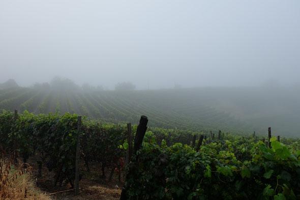 霧の立ちこめる日が続き、湿気が多い夏でした。