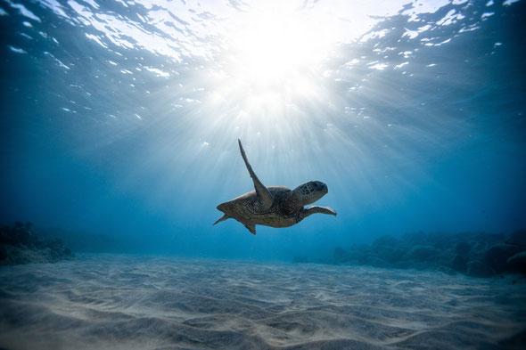 Het scheidingsverhaal voor kinderen. Landschildpad en zeeschildpad