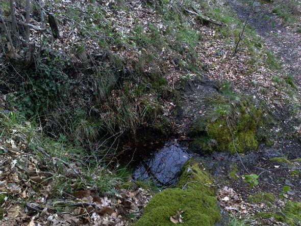 Das ist das Steinsbörnchen, aus dem Einhart sein Wasser holte