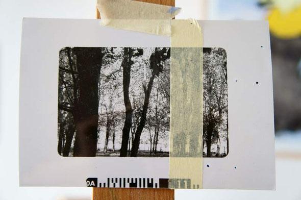 document photo des toiles précédentes, scotché sur le chevalet