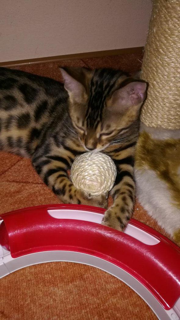 """Mein Ball!"""