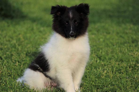 Buddy mit 3 1/2 Monaten