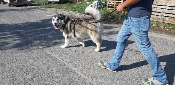 Dogwalk im ersten Wiener Bezirk