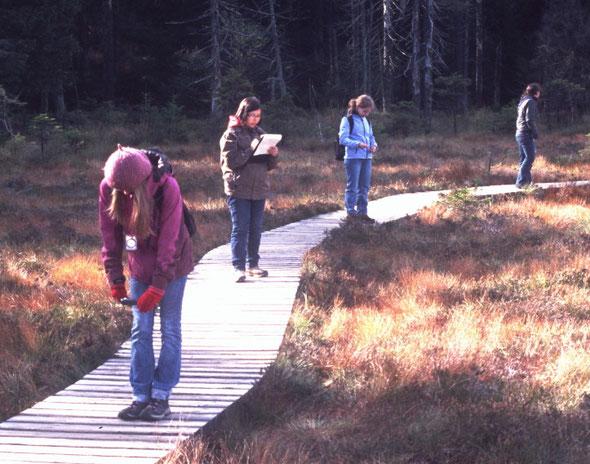 Messungen zum Mikroklima am Großen Torfhausmoor (© N.Bertelsbeck)