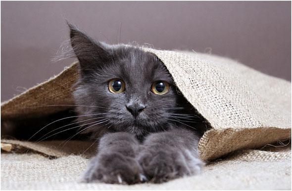 Katze im Sack muss nicht sein