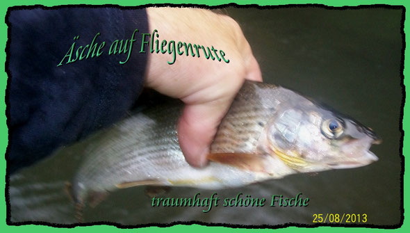 einer meiner schönsten Fische die ich bisher auf Fliege überlisten konnte