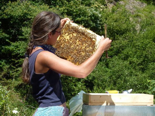 Bienenbrut-Kontrolle