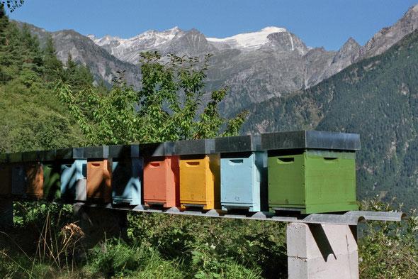 Bienenstand mit Aussicht zur Adula
