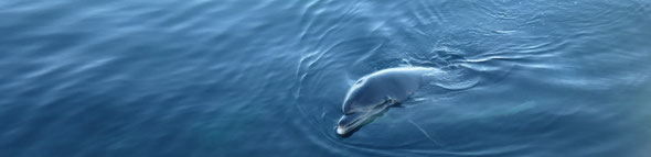 Le grand dauphin Randy