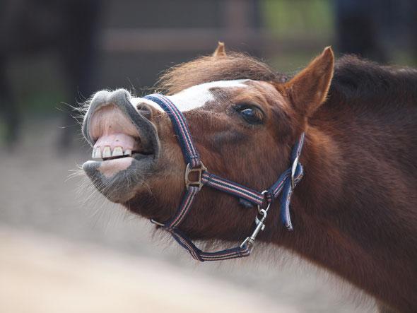 Reitschule, Pferde, Hamburg, Reiten lernen