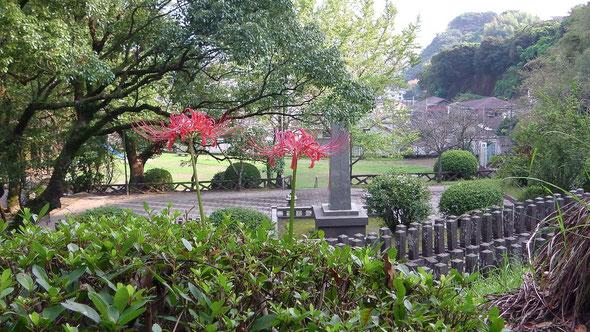 墓地に咲いた彼岸花