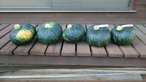 NO.10 カクヤスさんの苗で18個収穫しました