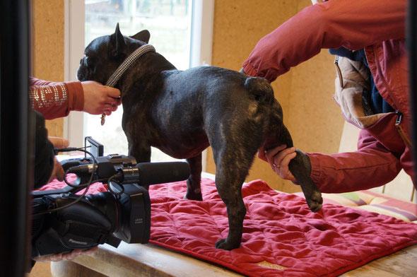 Osteopathie am Hund - Schmerztherapie bei Hunden -  Diana Tiebes, Essen, NRW
