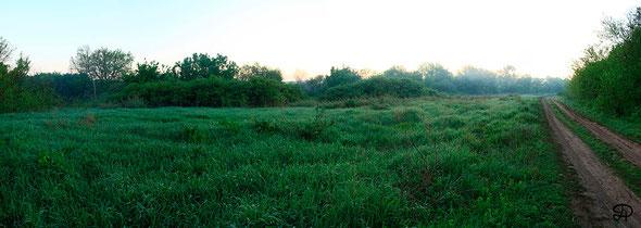 Глубокое зеленое туманное утро