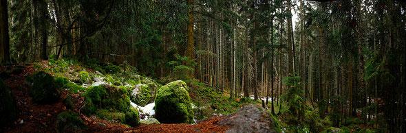 Сосновый бор с камнями покрытыми мхом