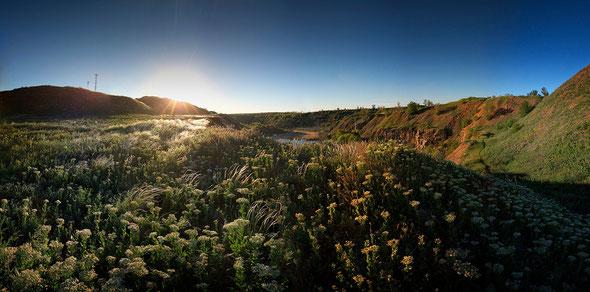 зеленое поле фото природы