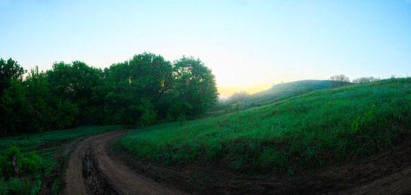 Зеленое туманное утро