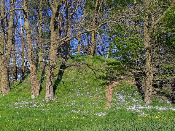 Die Hügelgrabnekropole bei Woorke im Frühling
