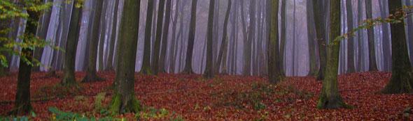 Mystische im Nebel versunkene Buchenwälder im Nationalpark Jasmund