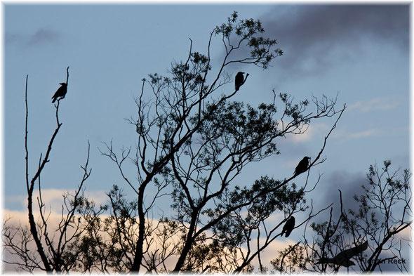 Foto - Florian Reck - wildlife picture