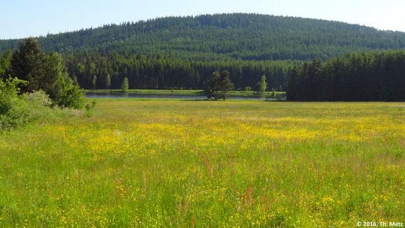 Abb. 1: Feucht- und Moorwiesen, Hecken, Gewässer und Wald sind die auf dem Foto sichtbaren Ökosysteme.