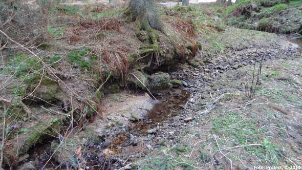 Abb. 3: Der Einsiedelbach im Januar 2014 etwa 400 m unterhalb der Wasserentnahmestelle für die technische Beschneiung.