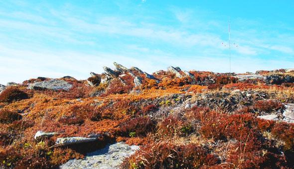 Silikatfelsen mit Felsspaltenvegetation und dazwischen alpine Heiden prägen den Kuppenbereich der Handalm, rechts oben im Bild einer der Windmessmasten (Foto: Josef Moser, Lizenz: CC BY-SA 3.0).