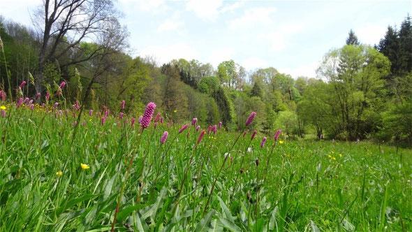 Wiese an der Zwettl mit Hangmischwald im Hintergrund (Lizenz: Pierre Vérité, CC BY-SA 3.0)